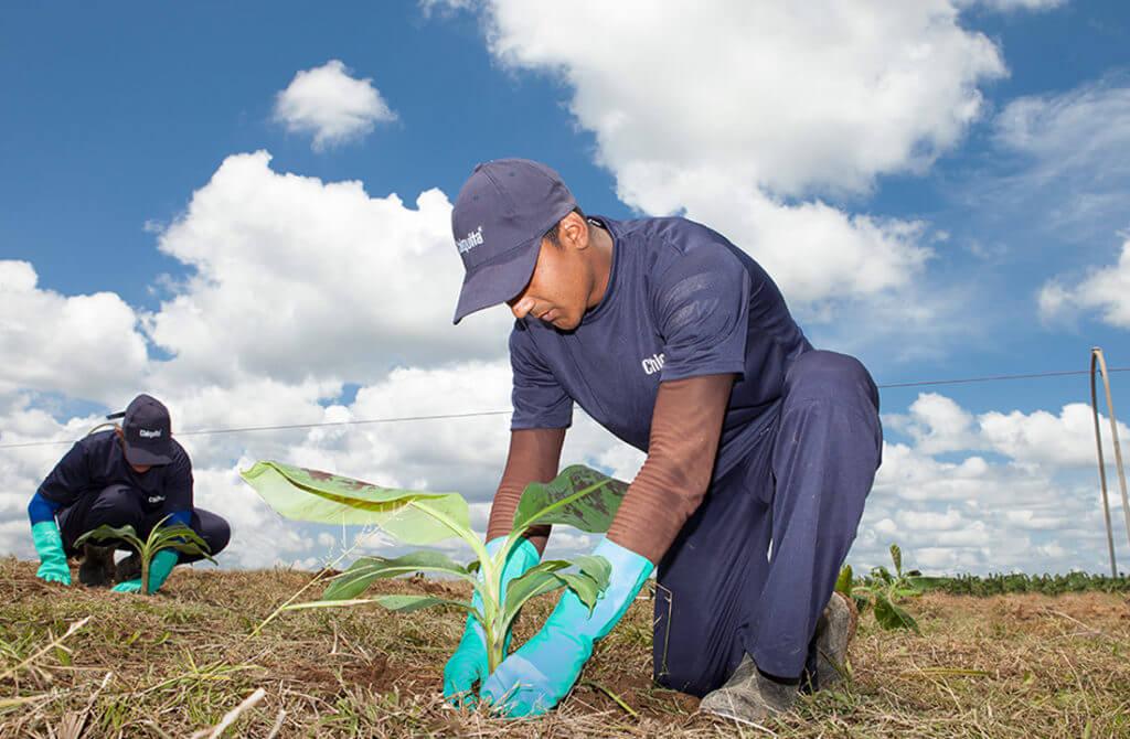 Chiquita announces new updated Sustainability Report - 2