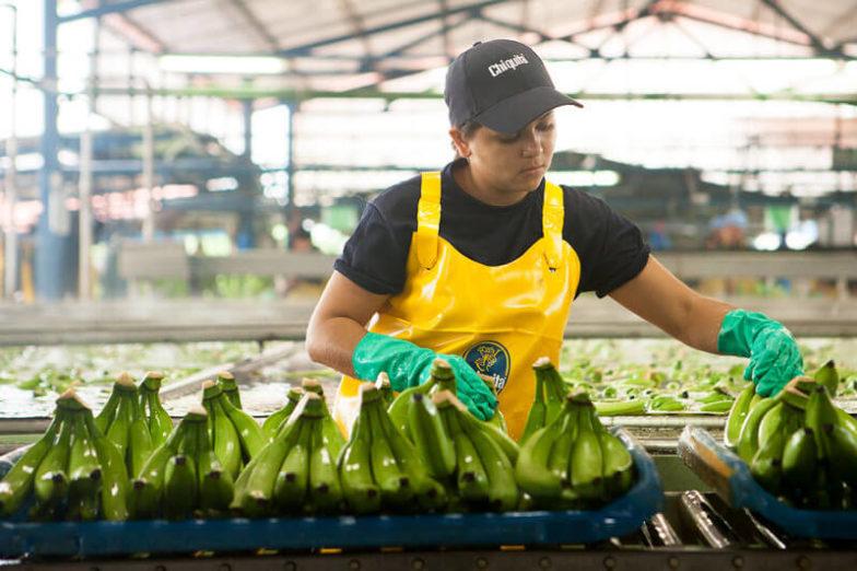 La gestione dell'impronta idrica nelle piantagioni Chiquita consente di risparmiare 1,8 miliardi di litri d'acqua all'anno - 1