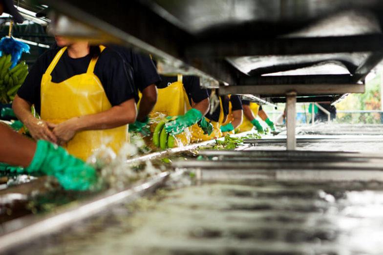 La gestione dell'impronta idrica nelle piantagioni Chiquita consente di risparmiare 1,8 miliardi di litri d'acqua all'anno- 2