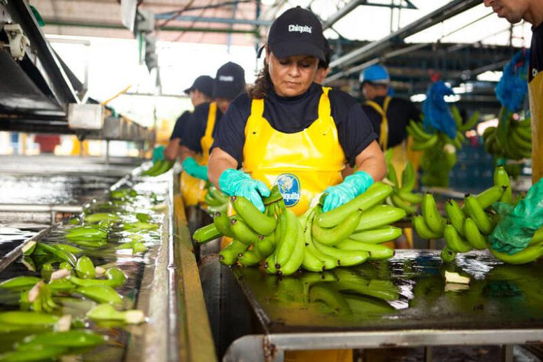 La gestione dell'impronta idrica nelle piantagioni Chiquita consente di risparmiare 1,8 miliardi di litri d'acqua all'anno - 3