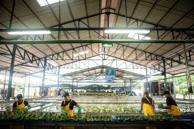 La gestione dell'impronta idrica nelle piantagioni Chiquita consente di risparmiare 1,8 miliardi di litri d'acqua all'anno - 4