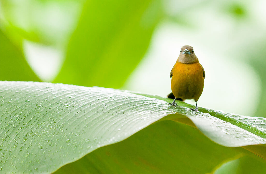 Chiquita leads the way in preserving biodiversity - 1