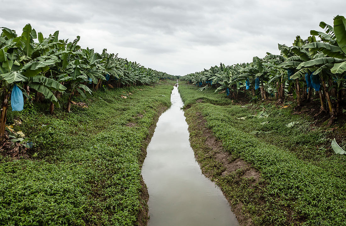 Chiquita leads the way in preserving biodiversity - 2