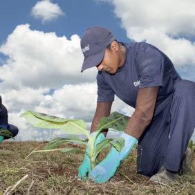 Chiquita è all'avanguardia nel preservare la biodiversità