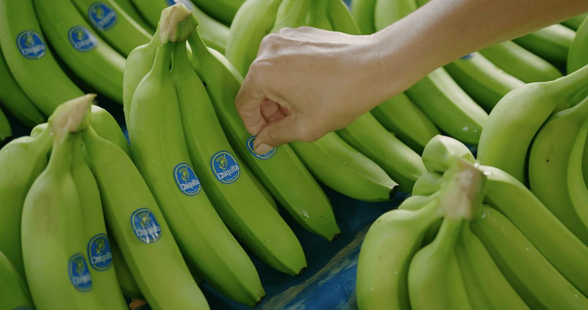 Chiquita - Behind the blue sticker - placing sticker 01- still 4096x2160-min_opt