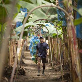 Banane Chiquita in fattoria: è tutta una questione di sostenibilità