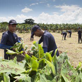Chiquita garantisce continuità alla sua missione in materia di agricoltura sostenibile